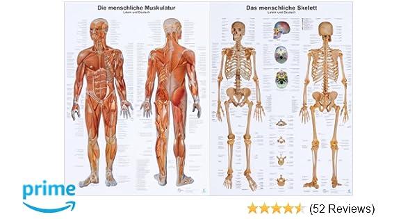 Doppelpack Anatomie-Lerntafeln Muskulatur und Skelett: Amazon.de ...