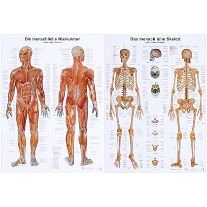 PDF] Doppelpack Anatomie-Lerntafeln Muskulatur und Skelett KOSTENLOS ...