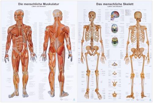 Doppelpack Anatomie-Lerntafeln Muskulatur und Skelett -
