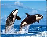 'deux' Killer-whales ': haute qualité Wildlife Tapis de souris avec animaux/Tapis de souris avec image de dauphins (Orcas)-fabriqué en Allemagne