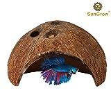 Sungrow - Palline Luffy per betta: piante marimo vive di forma rotonda: giocattoli naturali per pesci betta: Sicure per l'acquario.