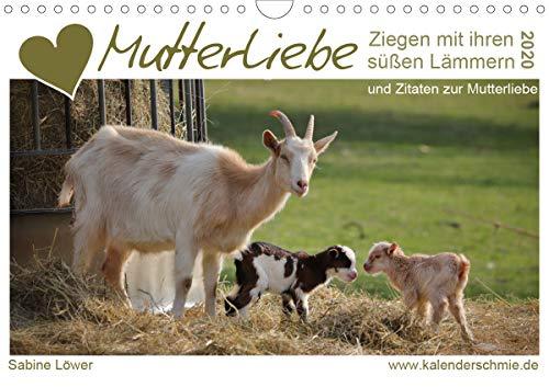 Mutterliebe - Ziegen mit ihren süßen Lämmern (Wandkalender 2020 DIN A4 quer): Ziegenmütter, Zicklein und Zitate (Monatskalender, 14 Seiten ) (CALVENDO Tiere) Fell, Horn