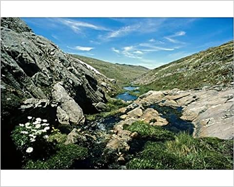 Photographic Print of JPF-14110 Mountain creek in spring Kosciuszko National Park