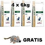 Royal Canin Obesity ( 4 x 6 kg ) MEGA PACK Katzenfutter + GRATIS, LANGE VARFALLSDATUM