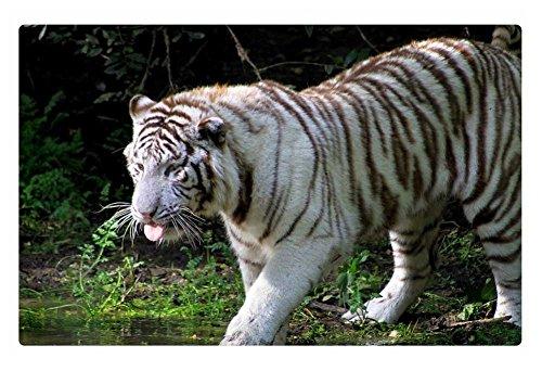 iRocket interior Suelo Alfombra/Alfombrilla–blanco tigre de Bengala (23.6'x 15.7', 60cm x 40cm)