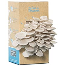 Kit culture de champignons Prêt à Pousser - Pleurotes Gris Bio - Pousse en 10 j
