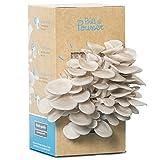 Kit culture de champignons - Pleurotes gris - Bio et Français