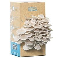 Une idée de cadeau original et utile pour Noël : offrir un kit à champignons ! Les pleurotes gris poussent en une semaine chez vous. Mode d'emploi : dans votre cuisine, ouvrez la boite, arrosez-la une fois par jour et, après une semaine, savourez vos...
