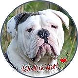 Aufkleber Englische Bulldogge - garantiert wetterfest, Ø 10 cm