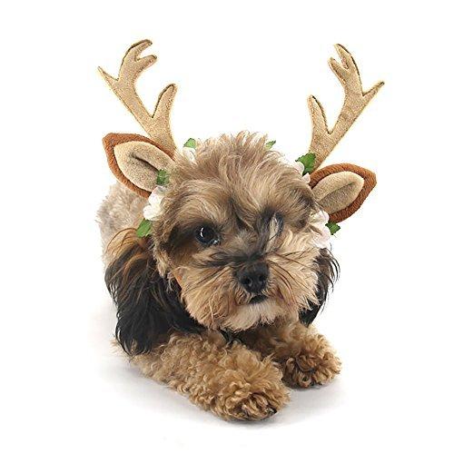 Pevor Pet Weihnachten Geweih Hat Cap-Elch Geweih Horn Form Haar Hoop mit Seide Blume Decor, Halloween Weihnachten Urlaub Cosplay Rentier Kopf Hoop Haar-Accessoires für Hunde, Katzen, S, (Elch Geweih Kostüm)
