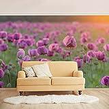 Bilderwelten Vliestapete Premium - Violette Schlafmohn Blumenwiese im Frühling - Fototapete Breit Vlies Tapete Wandtapete Wandbild Foto 3D Fototapete, Größe HxB: 255cm x 384cm