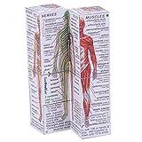 Human Body: Systems and Statistics hergestellt von ZooBooKoo International Ltd