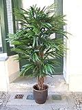 Künstlicher Longifolia de Luxe, Lianenstamm, Top-Qualität-