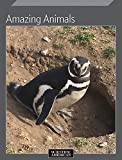 #8: Amazing Animals
