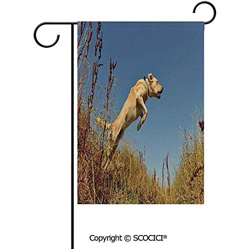 Double Sided Washable Customized Unique 12x18(in) Garden Flag Purebred Labrador Retriever Jumping in a Field Blue Sky Rural Outdoors Photo Decorative,Multicolor -