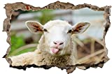 Schaf Tier Wolle Wandtattoo Wandsticker Wandaufkleber D1307 Größe 100 cm x 150 cm