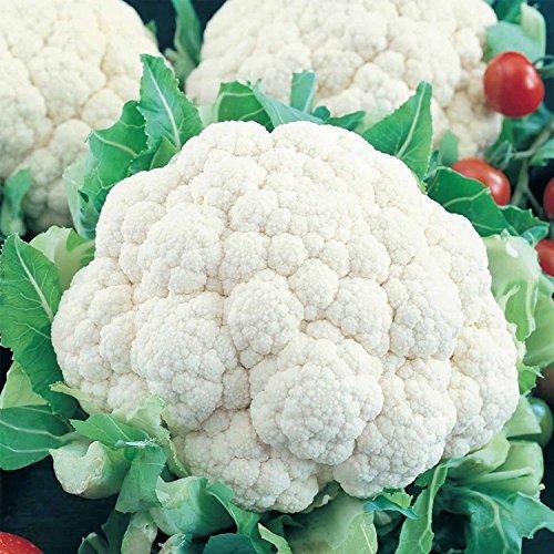 350 de boule de neige Y Chou-fleur Semences Améliorées non OGM