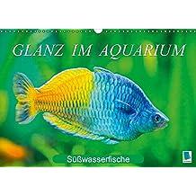 Glanz im Aquarium: Süßwasserfische (Wandkalender 2017 DIN A3 quer): Aquarium: Prachtregenbogenfisch, Marmorskalar & Co. (Monatskalender, 14 Seiten) (CALVENDO Tiere)