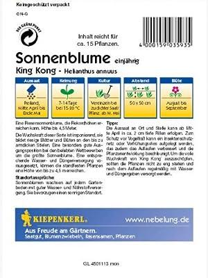 Helianthus annuus Sonnenblume King Kong gelb riesenwüchsig von Kiepenkerl - Du und dein Garten