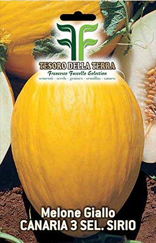 180 aprox – Canaria Yellow Melon Samen 3 Sel – Sirio – Cucumis Melo In Originalverpackung Made in Italy – Gelbe Melonen