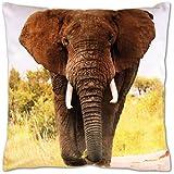 Bestlivings Kissenbezug mit Fotodruck ca. 40x40cm, Beidseitig Bedruckt, in vielen Motiven verfügbar (Design: Elefant/Elefant)