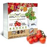 Seed Box SBCUTC - Huerto urbano de tomates cherry