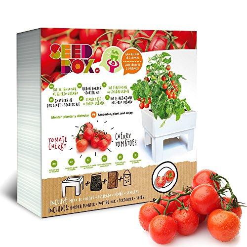 Huerto urbano de tomates cherry SBCUTC