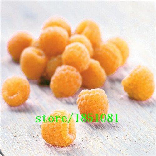 Big promotion 100Four variétés différentes de graines de framboise! variété de choix de fruits délicieux! Comestible! Facile à cultiver! Accueil g