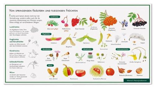fruchte-und-ihre-verbreitung-von-springenden-krautern-und-fliegenden-fruchten-wawra-naturpostkarte-z
