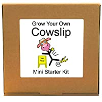 Grow Your Own Cowslip Wildflower Plant Growing Kit - Unusual, Unique and Quirky Complete Beginner Friendly Indoor Gardening Gift for Men, Women or Children