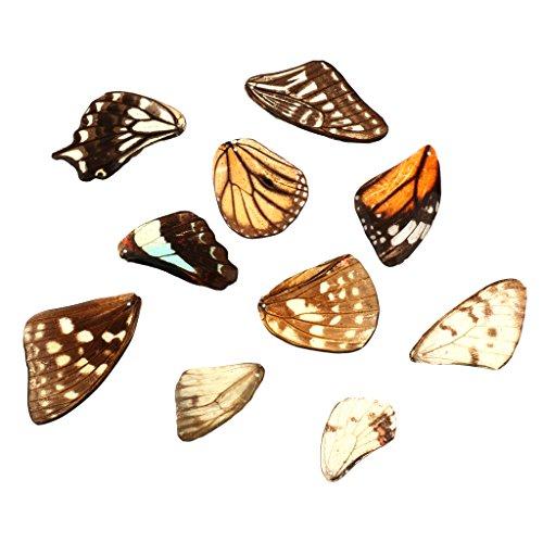 Gazechimp Gemischte Schmetterlingsflügel Handgemachte Diy Bastelbedarf Ohring Schmuckherstellung - drei
