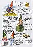 Image de Les gnomes