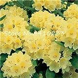 Bloom Green Co. 100 pc rara Colorful Rododendro piante in vaso come geranio Gigli Semillas de Flores Illumina il tuo giardino personale: c