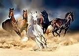 Fototapete Tapete Poster Pferde Tiere Mädchen 160x115cm + KLEISTER | FTM 0859