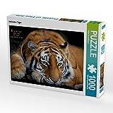 CALVENDO Puzzle Indischer Tiger 1000 Teile Lege-Größe 64 x 48 cm Foto-Puzzle Bild von Heinz Schmdibauer