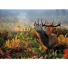 Tierwelt Wald 2018 (Tierwelten)