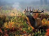 Tierwelt Wald 2018 (Tierwelten) - Ackermann Kunstverlag