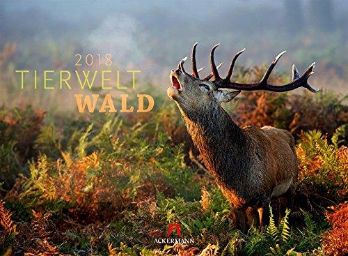 Tierwelt Wald 2018 (Tierwelten) (Wand-kalender Blumen)