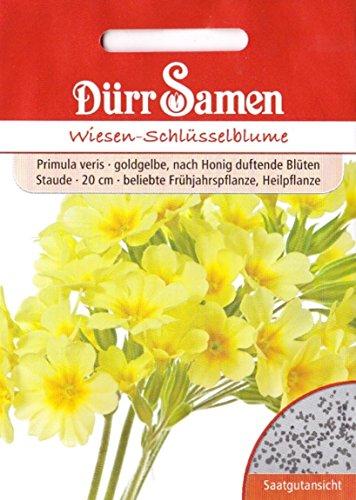 Wiesen-Schlüsselblume, Primula veris, ca. 80 Samen