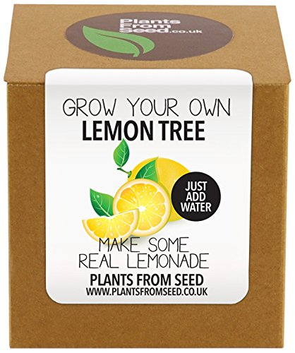 plants-from-seed-grow-your-own-lemon-tree-plant-kit