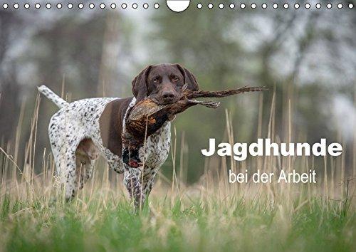 Jagdhunde bei der Arbeit (Wandkalender 2017 DIN A4 quer): Unentbehrliche Gehilfen, Freunde und Gefährten des Jägers (Monatskalender, 14 Seiten) (CALVENDO Tiere)