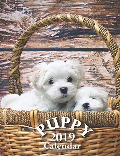 Puppy 2019 Calendar
