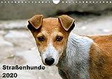 Straßenhunde (Wandkalender 2020 DIN A4 quer): Hunde, die in Indien auf der Straße leben (Monatskalender, 14 Seiten ) (CALVENDO Tiere)