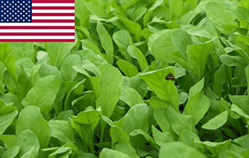 AGROBITS Rucola-Salat (Roqute) – 1.000 + 2.017 See