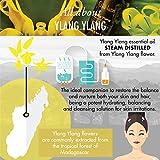 Vanille Oleoresin ätherisches Öl (Indonesien)–100% reine, Bio-, natur und therapeutische Grade für Aromatherapie Diffusor, Gesundheit Haut Raum und Entspannung–10ml–GYA Labs