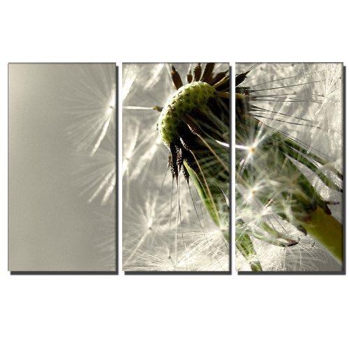 3 teiliges Bild 130x80cm (blown away 3x40x80 cm) Wandbild auf ECHTER Leinwand gerahmt Blumenbild Pusteblume Foto als Bild – Bilder fertig gerahmt mit Keilrahmen riesig. Ausführung Kunstdruck auf Leinwand. Günstig inkl Rahmen