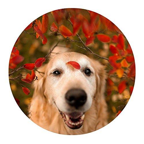 ßabtreter Niedlich Hunde Runden Teppiche Thema Bodenmatte Wohnzimmer Büro Teppiche Persönlichkeit Dekoration Matte, E, 60 * 60cm ()