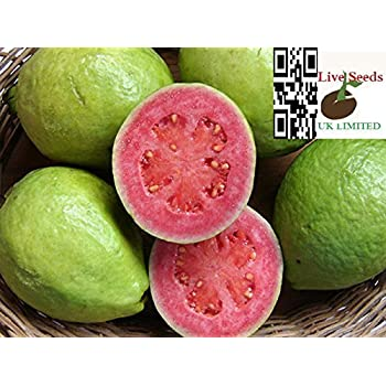 """Best Pomegranate In The World-/""""Angel Red/"""" 10 Seeds-Live Seeds"""
