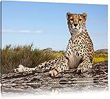 Gepard in Savanne Format: 80x60 auf Leinwand, XXL riesige Bilder fertig gerahmt mit Keilrahmen,...