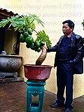 Shopmeeko 30 teile/beutel Papaya pflanze Super Sweet Tasty Melone Frische Papaya Sukkulente Sehr Einfach obst pflanze Für Diy Hausgarten